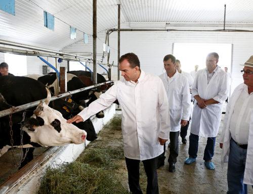 Развитие животноводства в приоритете